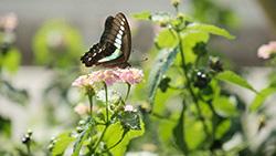 【AMP】amp-imgをクリックを無効にする【備忘録】
