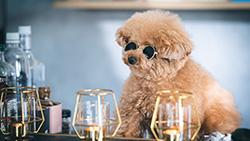 【Bulma】Bulmaでカラムを逆配置にする方法【備忘録】