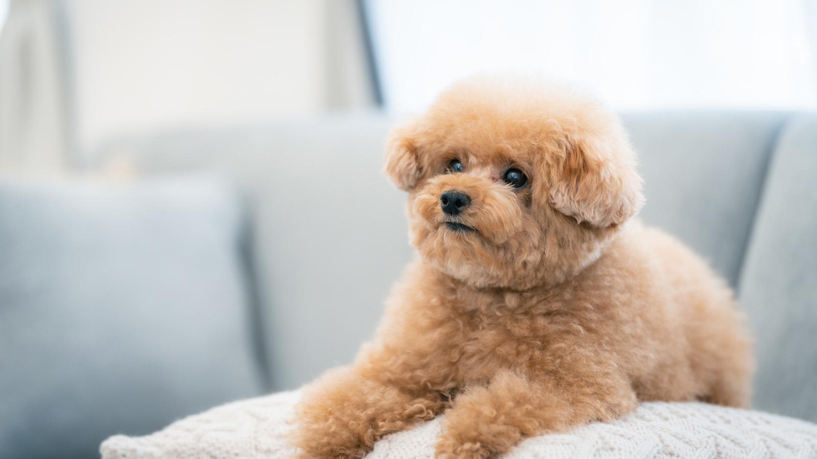 【Hugo】terms(カテゴリ一覧)のjsonが作成できない