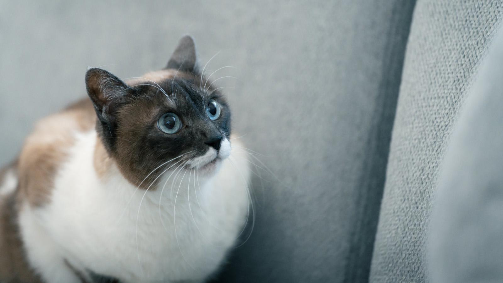【Git】Gitアカウントを切り替えたときにプッシュできない