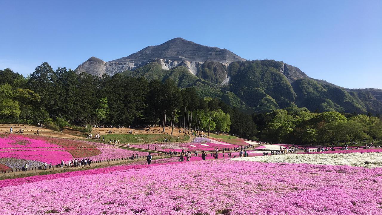 芝桜を観に秩父に行ってきた!横瀬双子山にもね