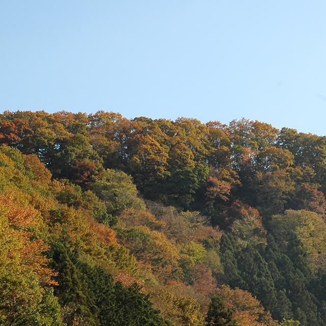 高尾山の山麓