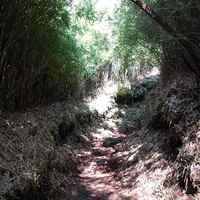 金時山木のトンネル
