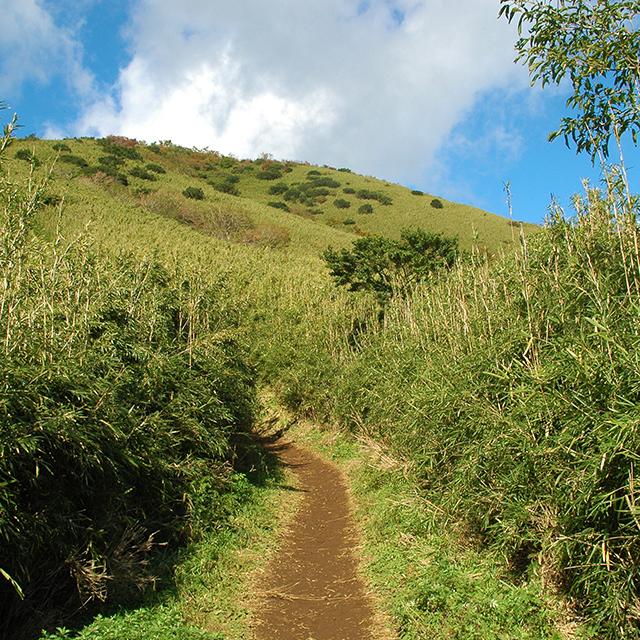 金時山、ジブリの世界のような道