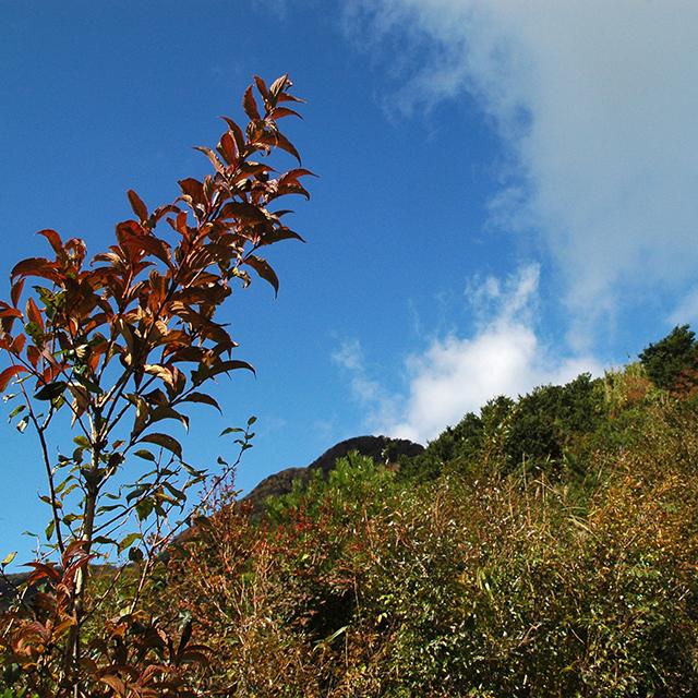 金時山、紅葉の葉っぱをフレームに空を撮る