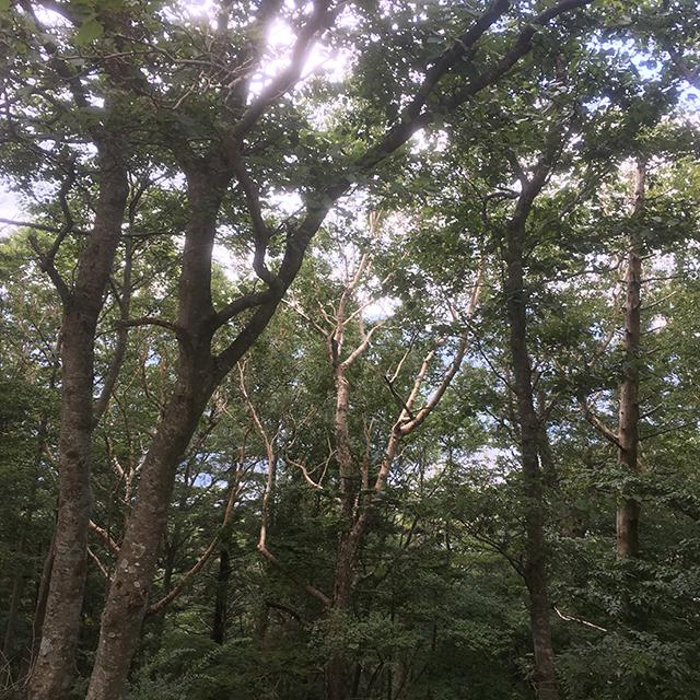 木の性質が変わってきました