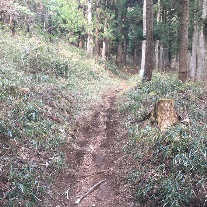 扇山登山道
